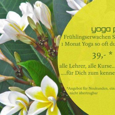 Frühlingserwachen Spezial - 39€ - alle Kurse, alle Lehrer - 1 Monat Yoga, so oft Du magst!